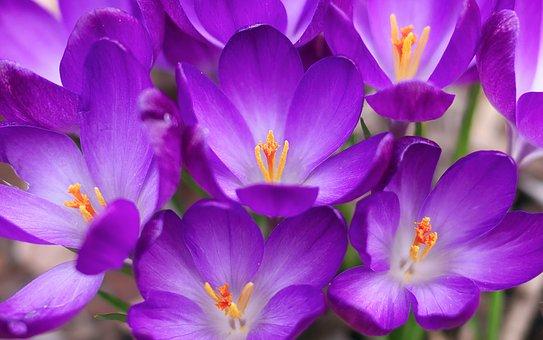 flowers-3166242__340